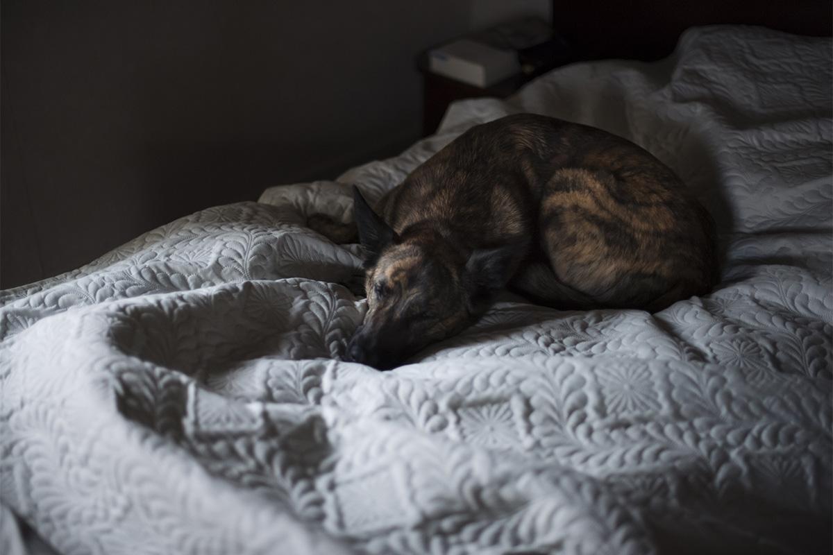 France 5 Frey bed